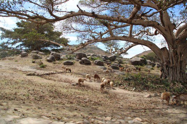 Une virée à la découverte des plus beaux paysages d'Afrique
